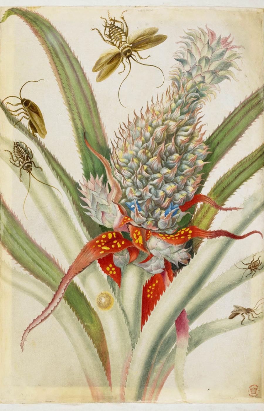 Maria Sibylla Merian, la precursora de entomología moderna.